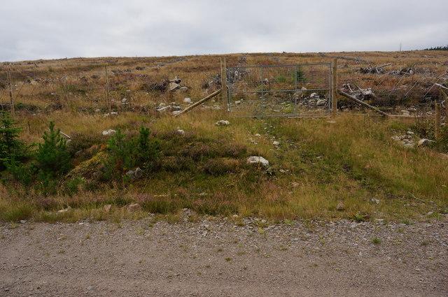 Gate in the Deer Fence, Tummel Forest
