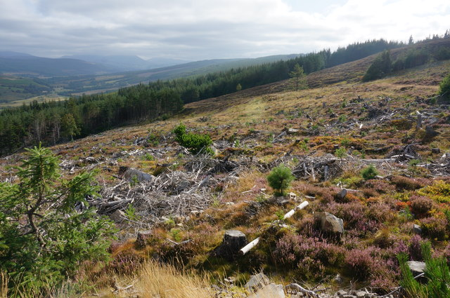 Clear felled area, Tummel Forest