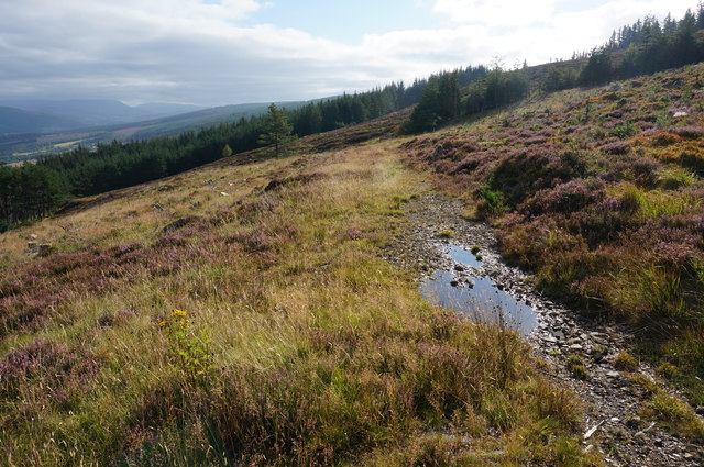 End of the track, Tummel Forest