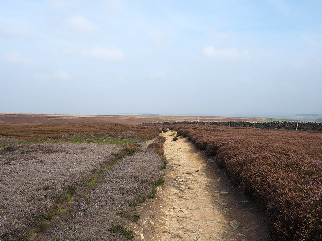 Bridleway and wall crossing heather moorland