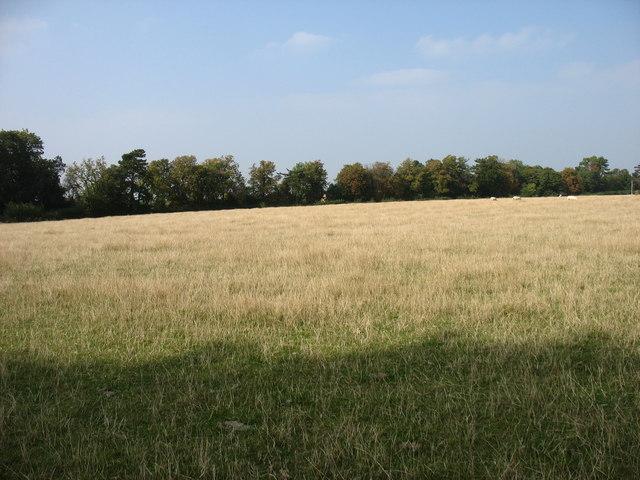 Farmland at Moreton Paddox