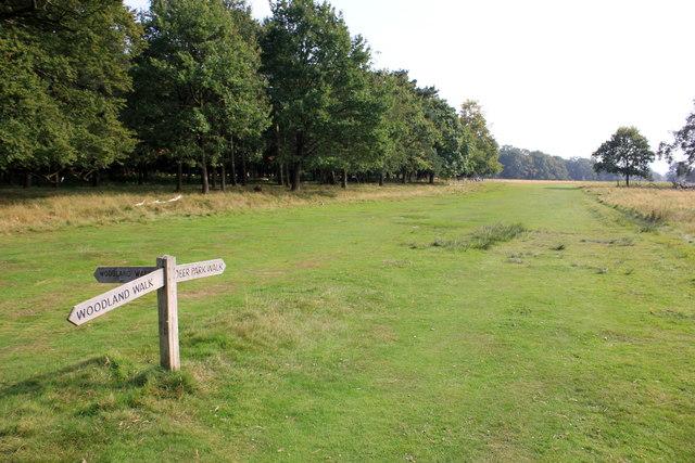 Footpaths at Attingham Park
