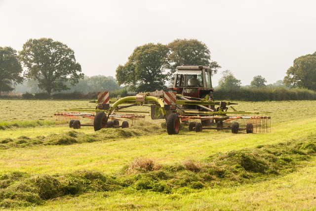 Late Silage