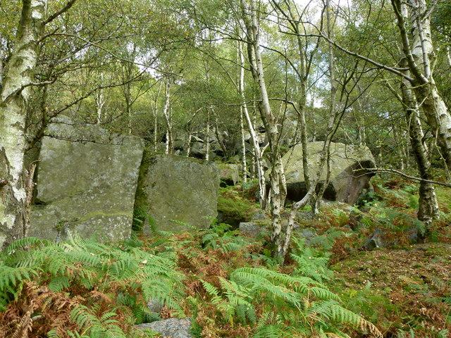 Boulders and birch trees below Gardom's Edge
