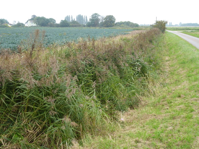 Dike next to Green Lane near Wigtoft