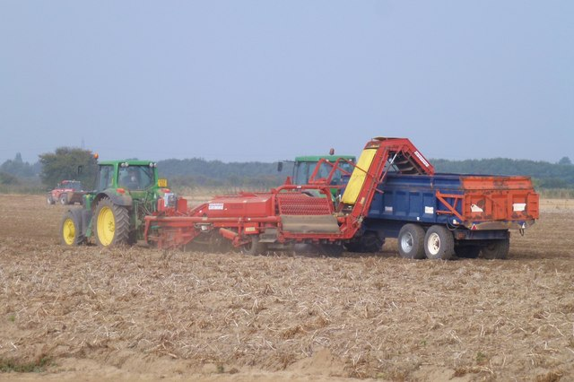Potato harvesting Donington South Ing, Lincolnshire