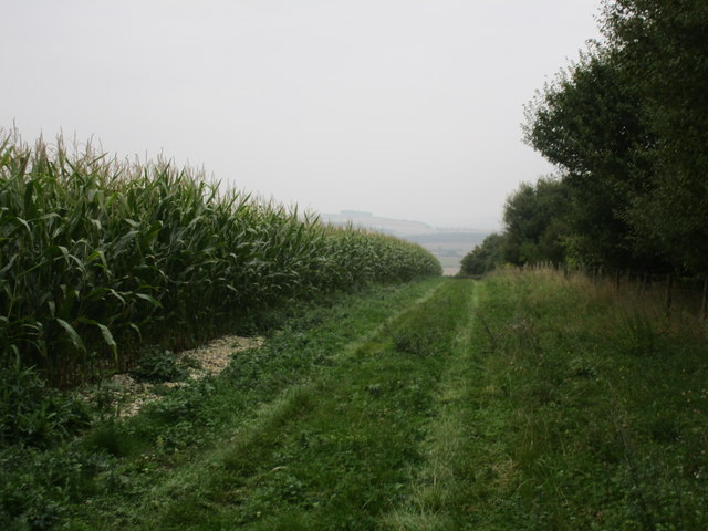 Between a maize field and a plantation
