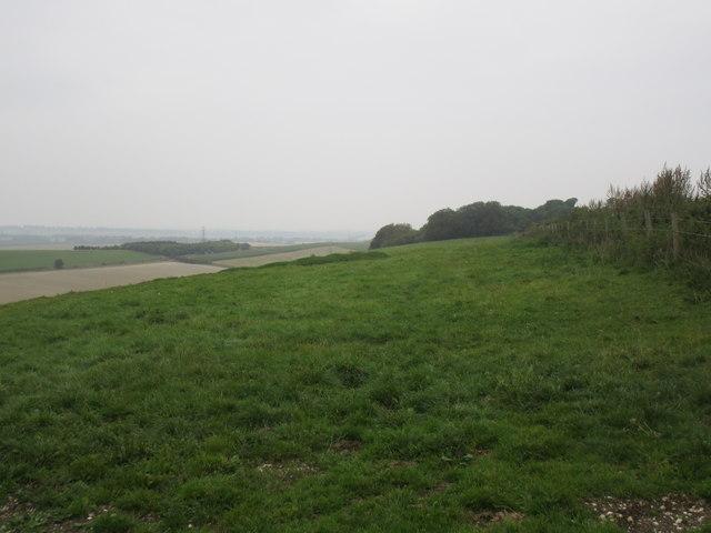 View towards Fairmile Clumps