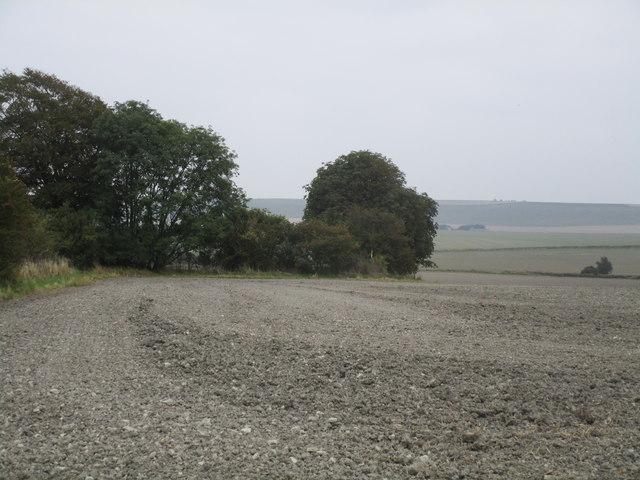Field edge between Broad Hinton and Winterbourne Bassett