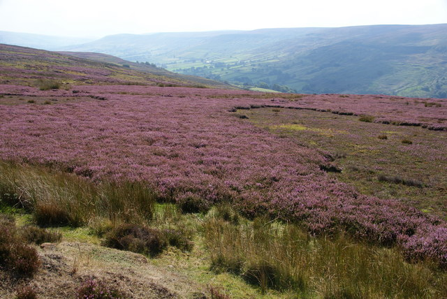 Heather moorland above Farndale
