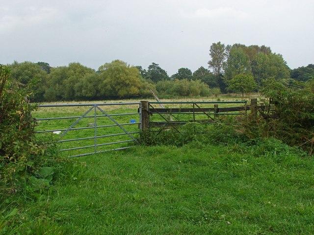 Fields near Gosden Common