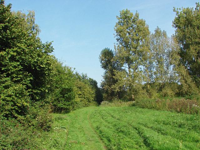 Footpath to Gosden Common