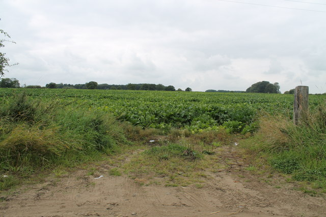 Crop field off Holton Lane