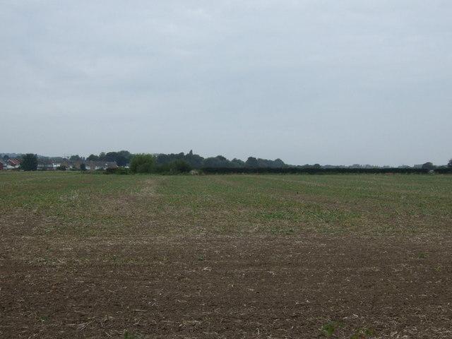 Farmland off Greensbridge Lane