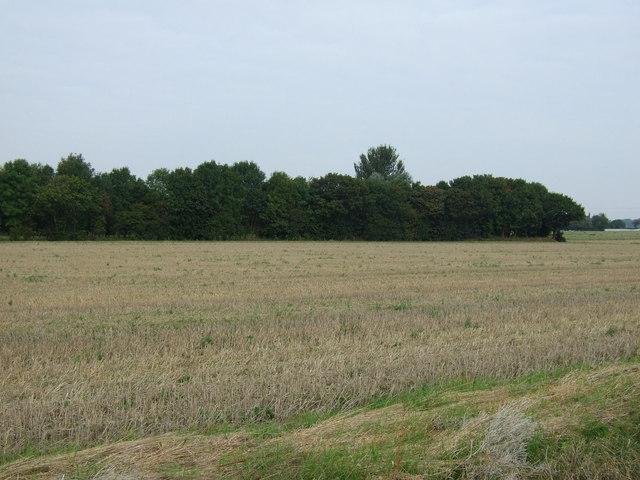 Farmland, Smaller Gorse Farm
