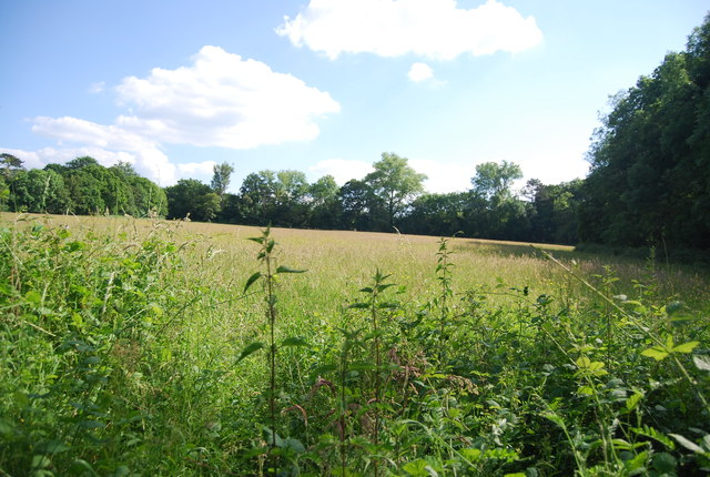 Grassy meadow near Hever