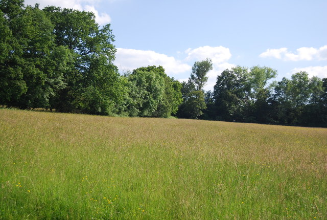 Grassy meadow near Hever