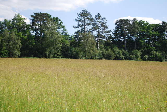 Meadow south of Hever Castle