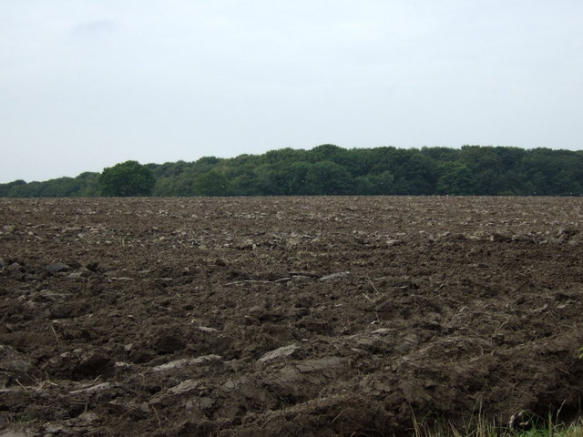 Ploughed field towards Rough Head (woodland)
