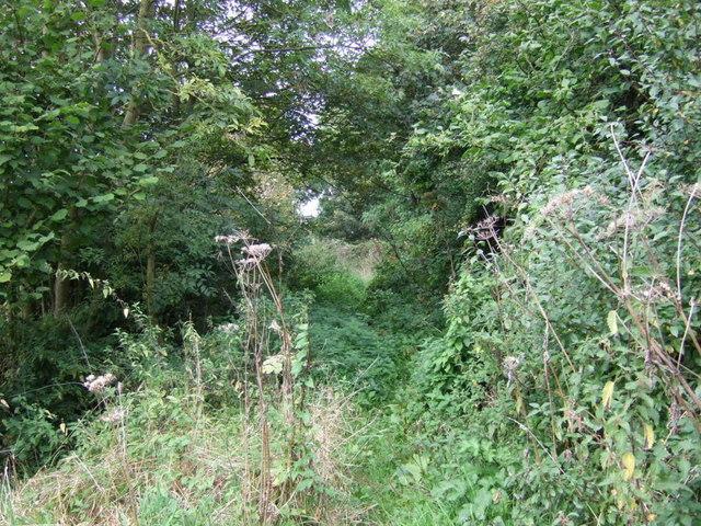 Overgrown track (Cronton Lane)