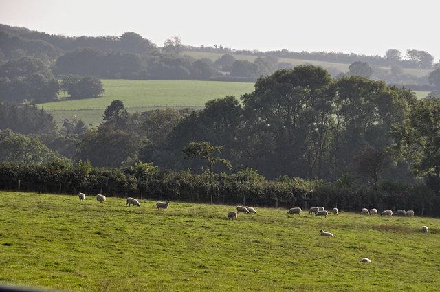 North Devon : Grassy Field & Sheep