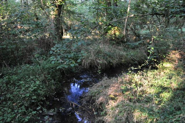 West Somerset : Stream & Woodland
