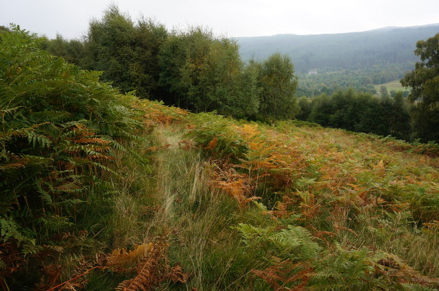 Faint path through Bracken