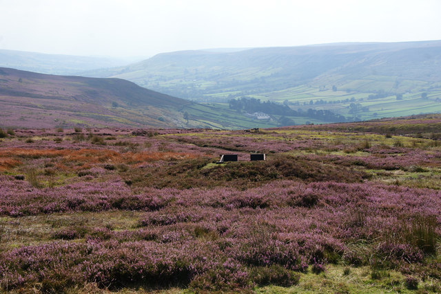 Line of grouse butts above Farndale