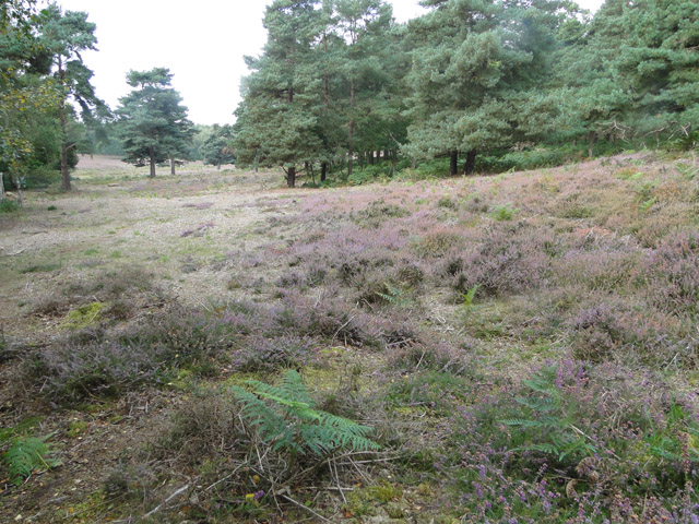 The end of the heather season