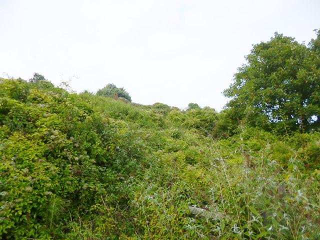 East Weare, vegetation