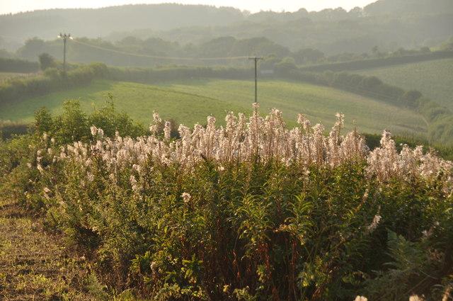 West Somerset : Roadside Hedgerows