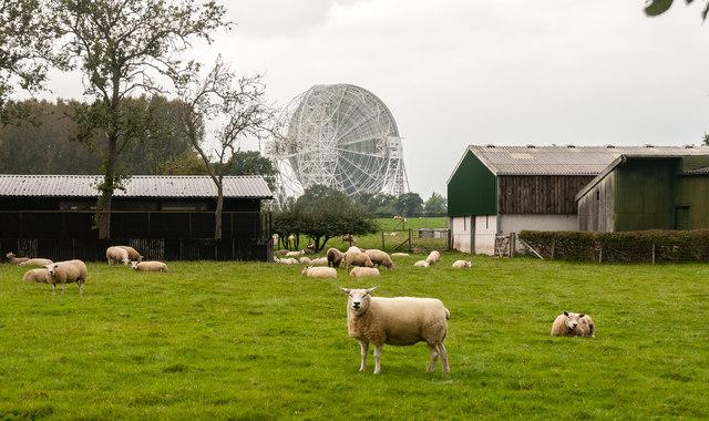 Beechtree Farm