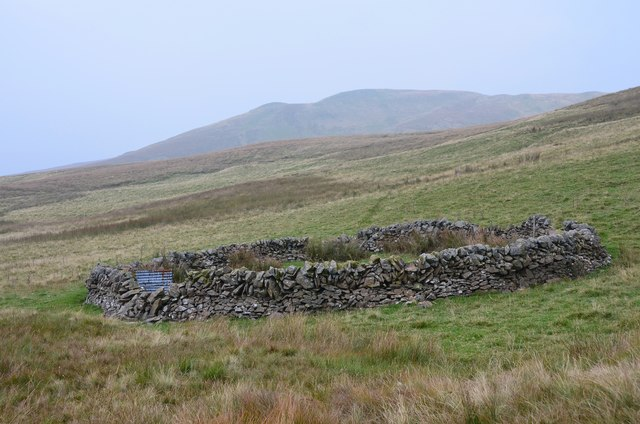Sheepfold near Whitehope Burn