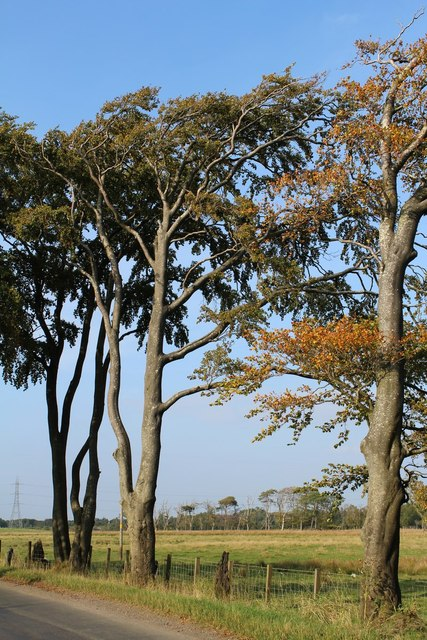 Trees by Auldhouse Road