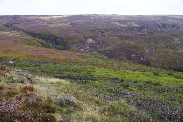 Moorland above Blakey Gill