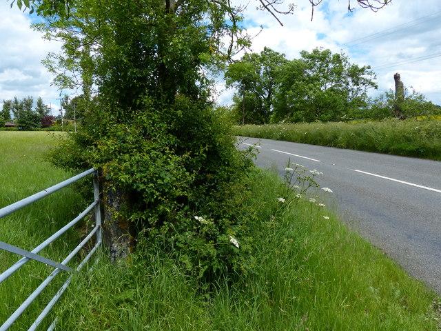 Gate along Tilton Lane