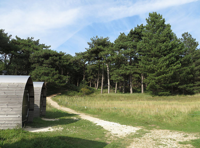 The firs and the loos at Holme Dunes