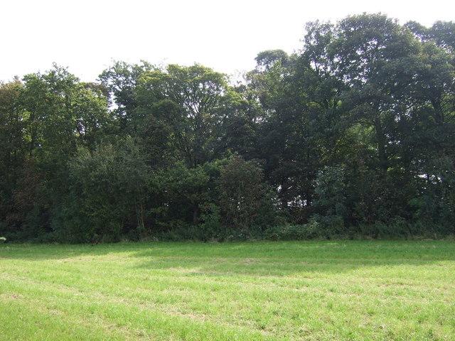 Brook Wood