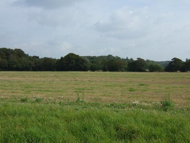 Farmland east of Crank Road