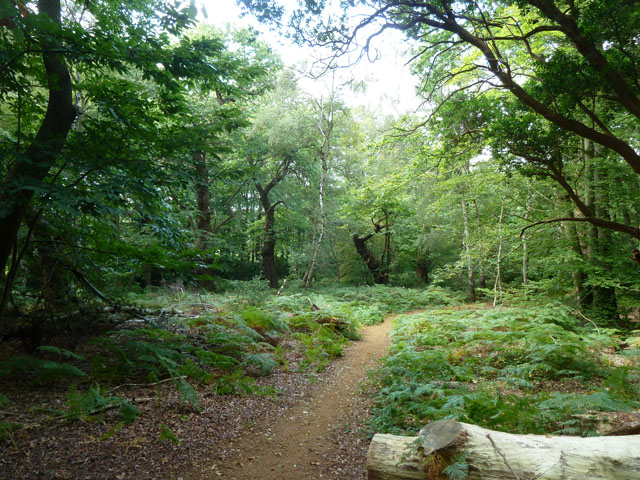 Path, Chobham Place Wood