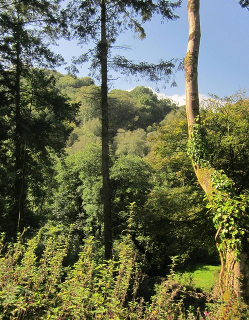Millway Wood