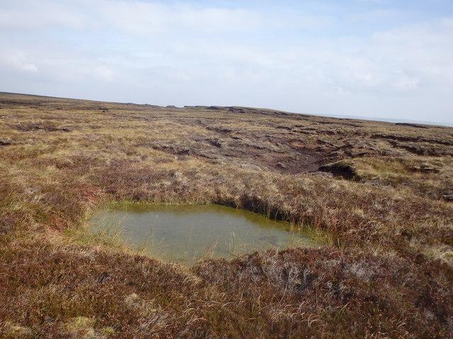Pond, Cutthroat Moss