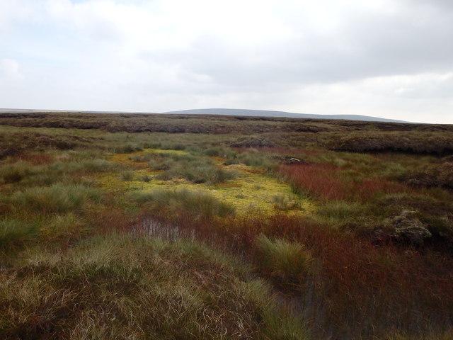 Bog, Three Pikes
