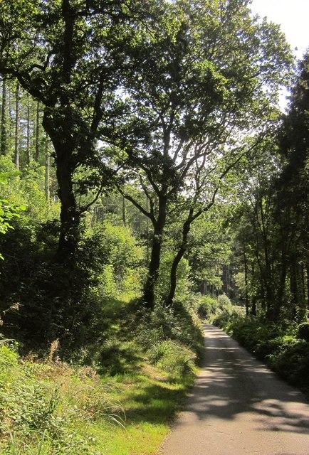 Lane to Hessenford