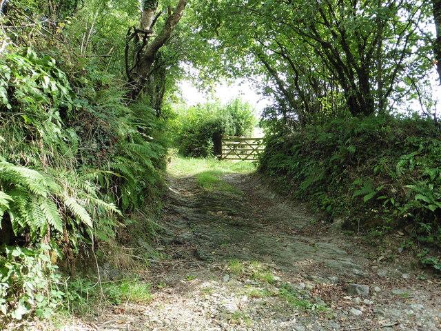 Track near Webland Farm, Horsebrook, South Brent