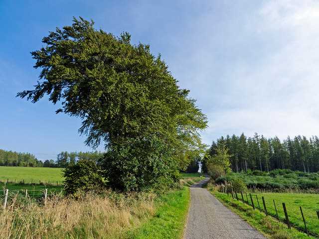 Road from Coldholm and Pookandraw Farms