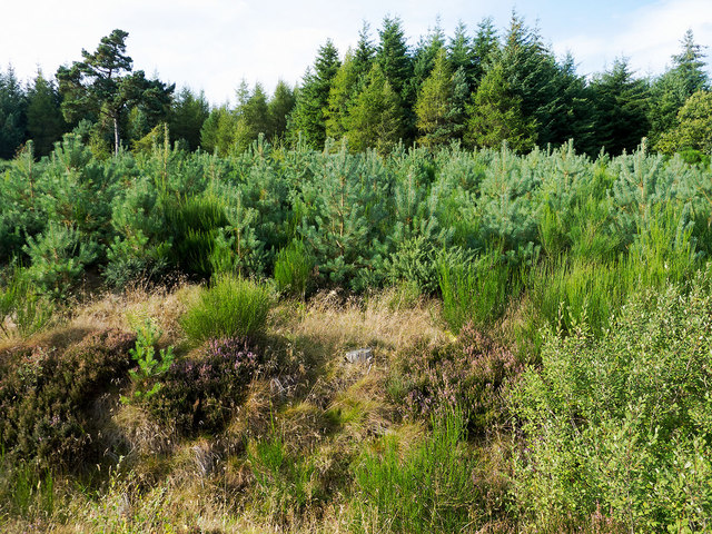Where new plantings and older trees are side-by-side