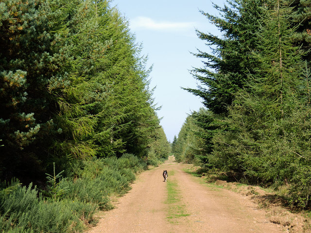 A straight forest track in the Millbuie Forest