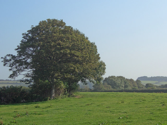 Trees beside a public footpath off Marlpit Lane