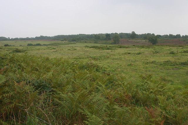 Ferny heathland east of Snape